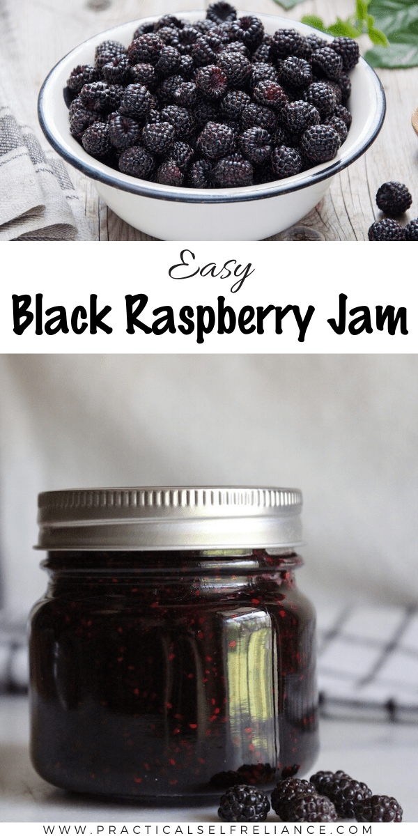 Black Raspberry Jam Recipe without Pectin ~ This easy homemade blackberry jam recipe works with wild or cultivated black raspberries, and is made without store-bought pectin. #canning #preserving #jam #blackraspberry