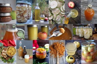 Ways to Preserve Apples ~ Collage of Apple Preservation Techniques