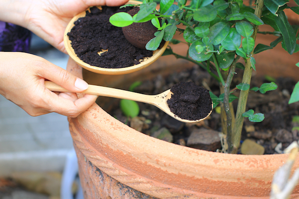 Uses for Coffee Grounds in the Garden