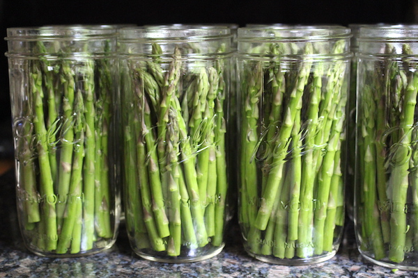 Raw packing asparagus spears for homemade asparagus pickles