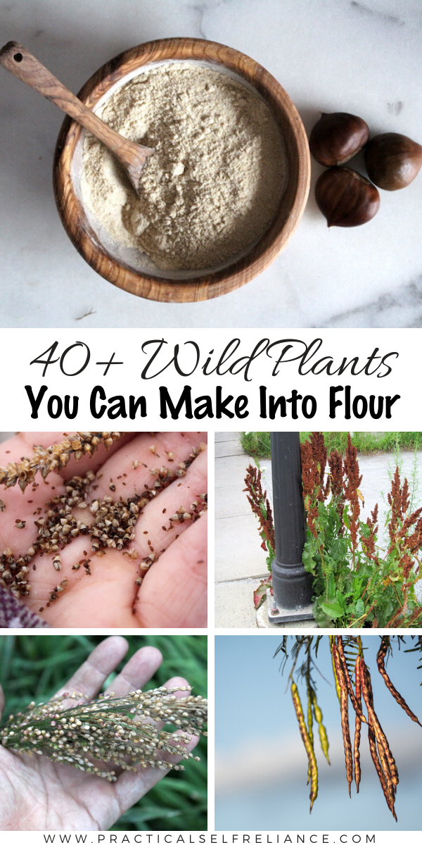 40+ Wild Plants You Can Make into Flour