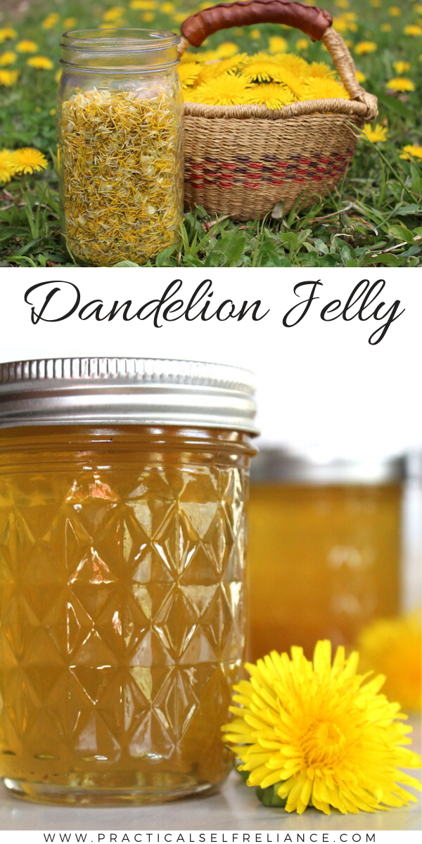 Dandelion Jelly Recipe ~ Learn how to make your own flavorful floral jelly from backyard dandelions.