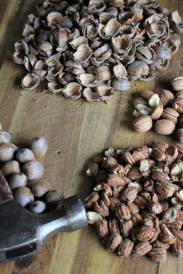 cracking acorns to make them into flour