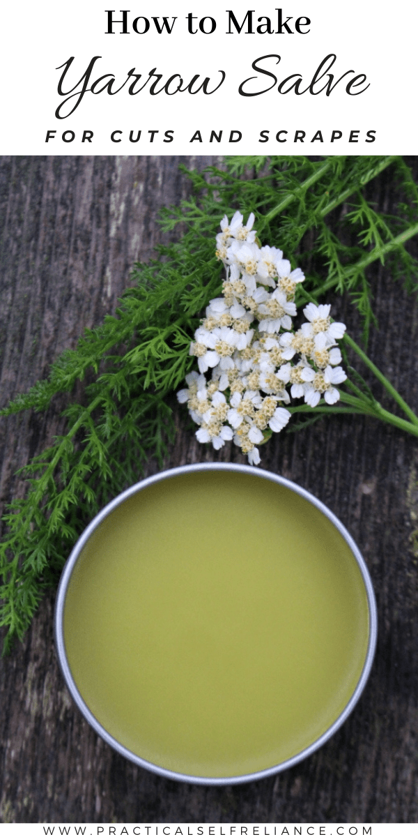 How to Make Yarrow Salve ~ Learn how to make this simple homemade salve for wound healing.