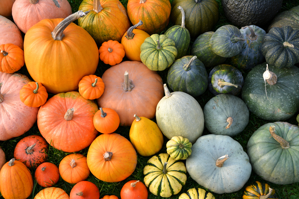 Winter Squash Varieties for Canning