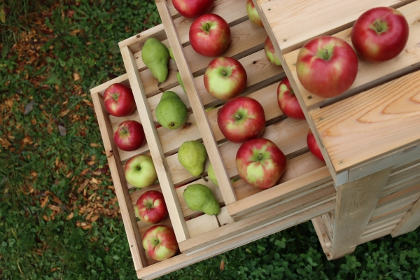 Top of a homemade apple storage rack