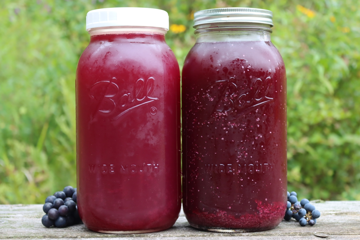 Acid Crystals in Wild Grape Juice