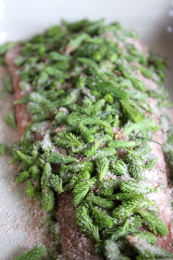 Salmon Curing in Spruce Tips