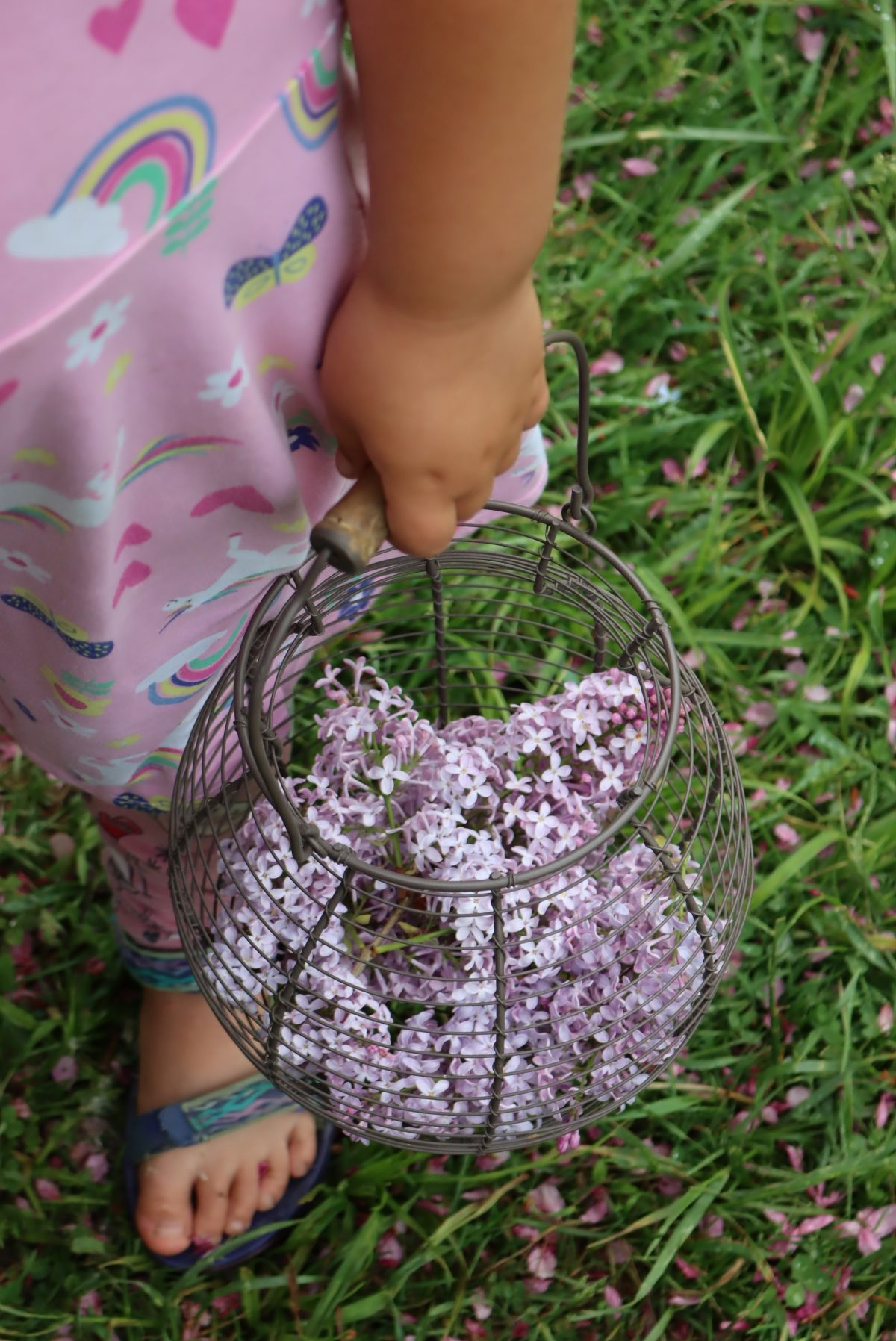 Basket of Lilacs for Jelly