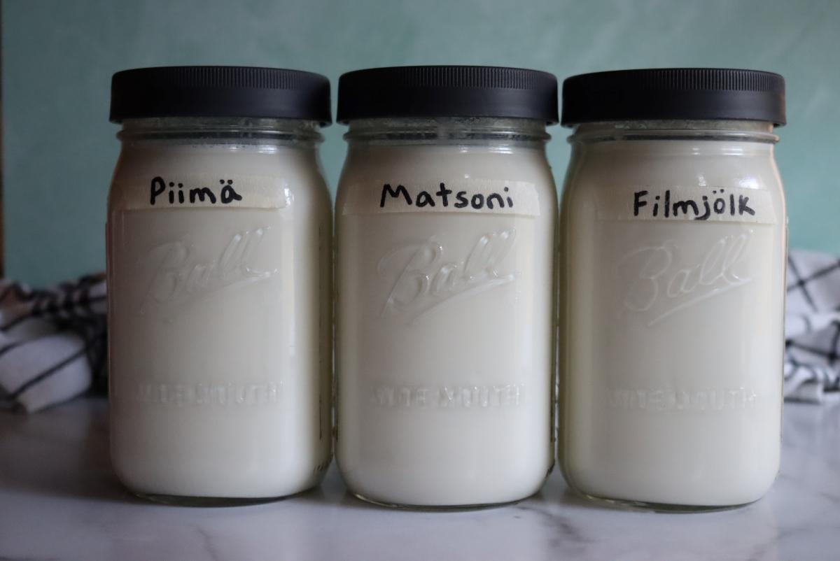 Mesophilic Yogurts Culturing