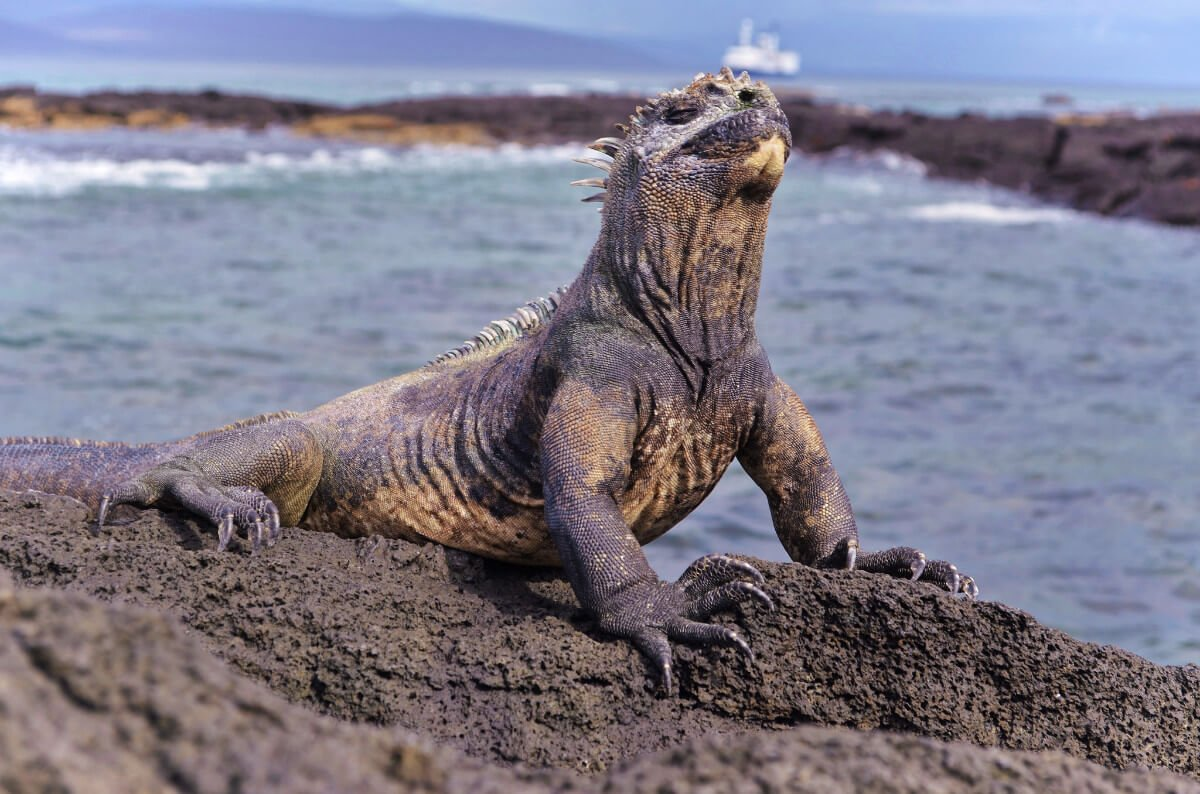 How To Visit The Galapagos Islands Without A Cruise A