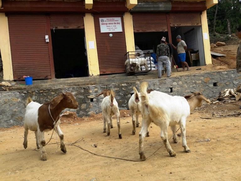 तनहुँका कृषकलाई कृषि बीमामा अनुदान