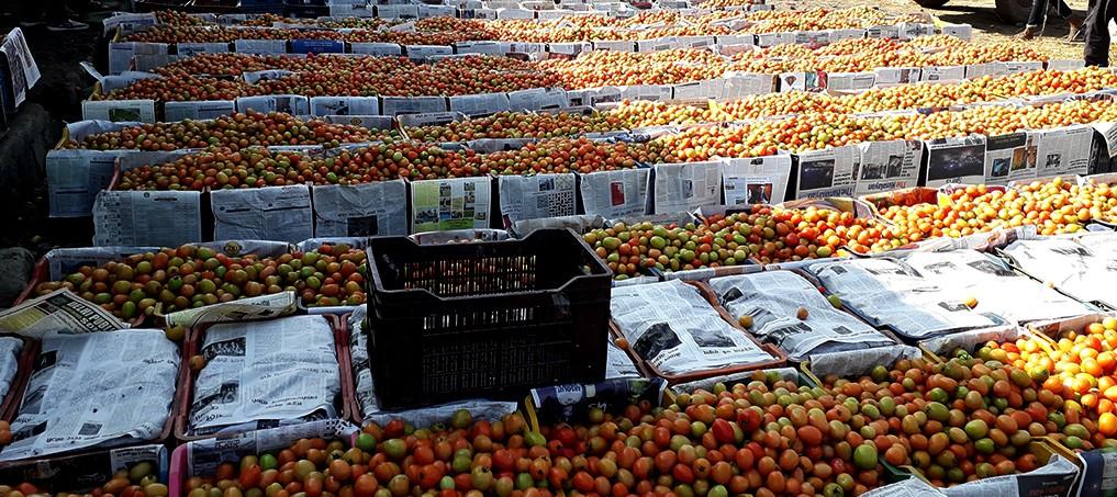 सर्लाहीका किसानले गोलभेँडाको उचित मूल्य पाएनन्
