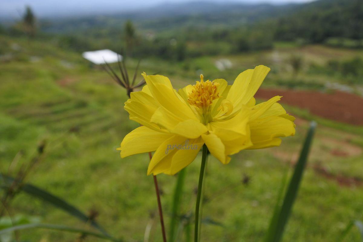 photograph bunga di tepi lembah