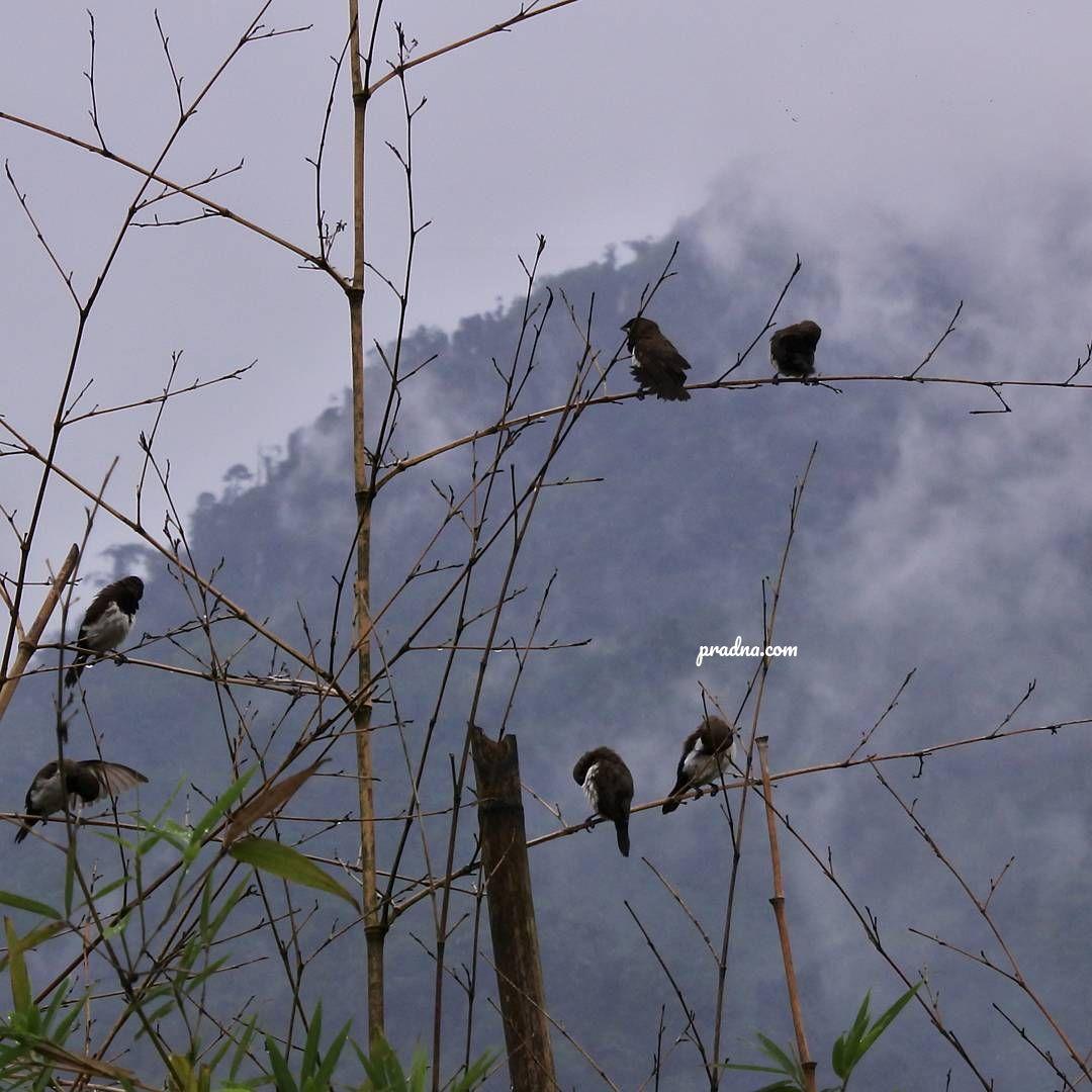 fotografi burung bertengger di tepi awan