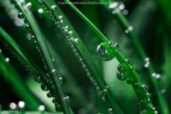 Удобрения для аквариумных растений, Praeclara Plant