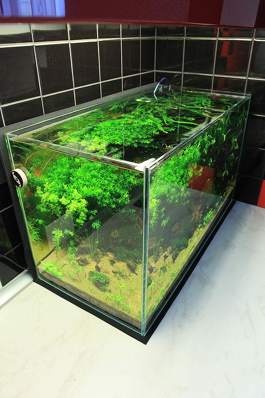 Студия аквадизайна Владимира Ходаковского оформляет аквариумы с живыми растениями любой категории сложности