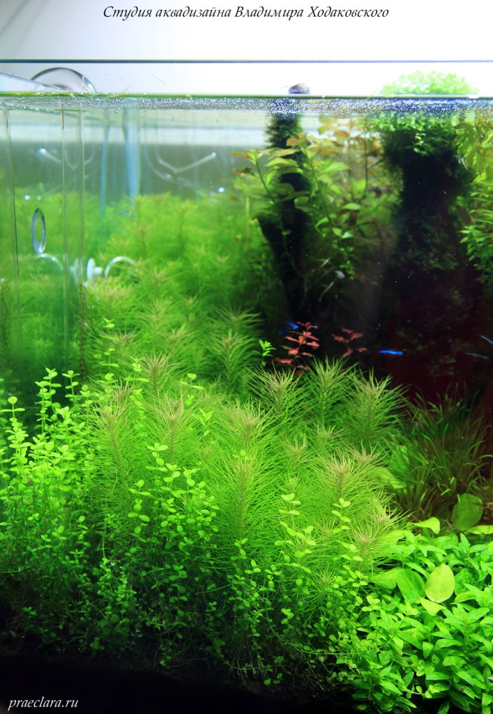 Фрагмент аквариума 650л