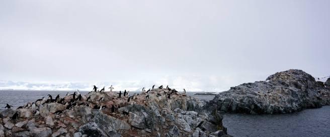 photos_and_videos/AntarcticaPenguins_10155338149716869/18121734_10155338150706869_7295469338017832818_o_10155338150706869.jpg