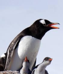 photos_and_videos/AntarcticaPenguins_10155338149716869/18121795_10155338175121869_668561257755622352_o_10155338175121869.jpg