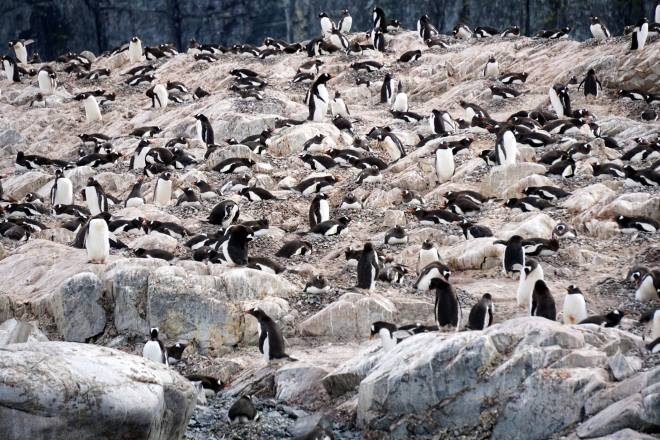 photos_and_videos/AntarcticaPenguins_10155338149716869/18121816_10155338163111869_2557821544138060706_o_10155338163111869.jpg