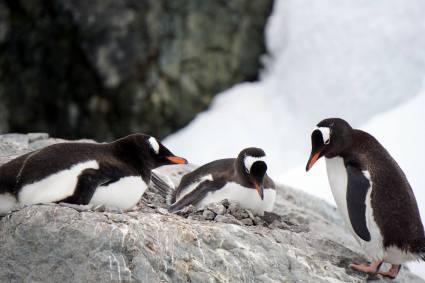 photos_and_videos/AntarcticaPenguins_10155338149716869/18121936_10155338162871869_9179327504194919799_o_10155338162871869.jpg