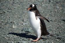 photos_and_videos/AntarcticaPenguins_10155338149716869/18156355_10155338150281869_5119276664199126609_o_10155338150281869.jpg