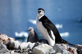 photos_and_videos/AntarcticaPenguins_10155338149716869/18156729_10155338175521869_3035736927073646946_o_10155338175521869.jpg