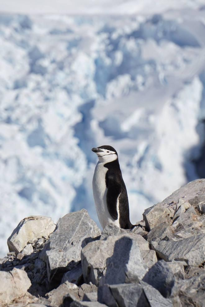 photos_and_videos/AntarcticaPenguins_10155338149716869/18192275_10155338159216869_149805682257487981_o_10155338159216869.jpg