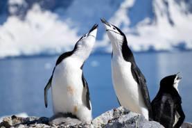 photos_and_videos/AntarcticaPenguins_10155338149716869/18192306_10155338173166869_7869914253756960945_o_10155338173166869.jpg