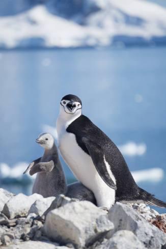 photos_and_videos/AntarcticaPenguins_10155338149716869/18193089_10155338173576869_8533380508451286992_o_10155338173576869.jpg