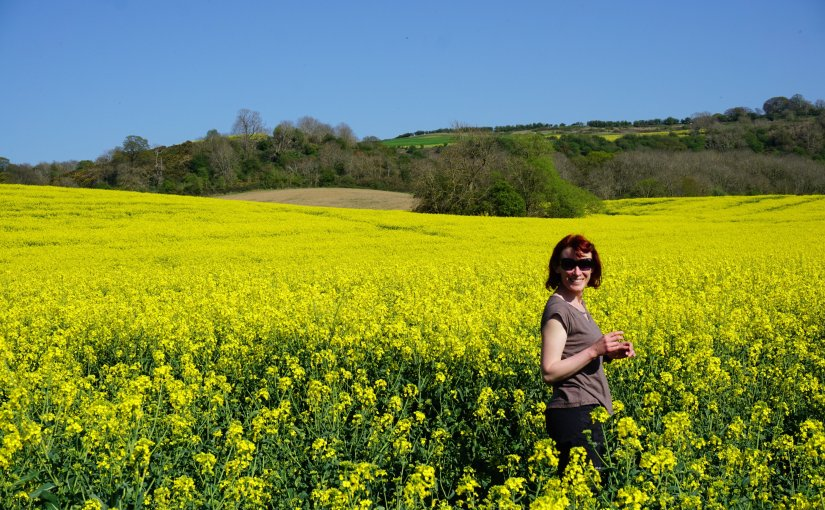 Cotswolds – fields of gold