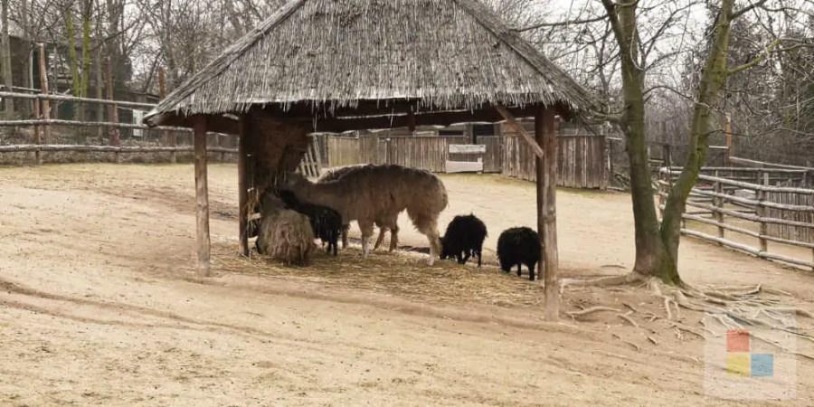 Zoo Zajezd   Lama