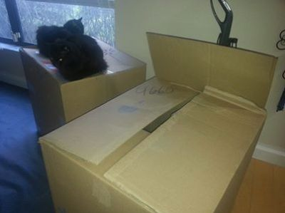 boo and bob on cardboard boxes