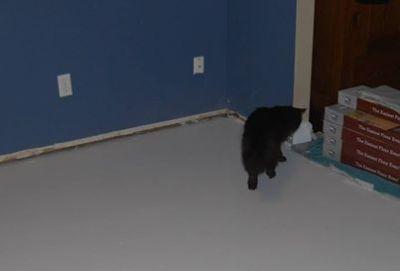 playroom floor wet sealer black cat