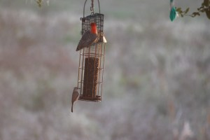 woodpecker-and-titmouse