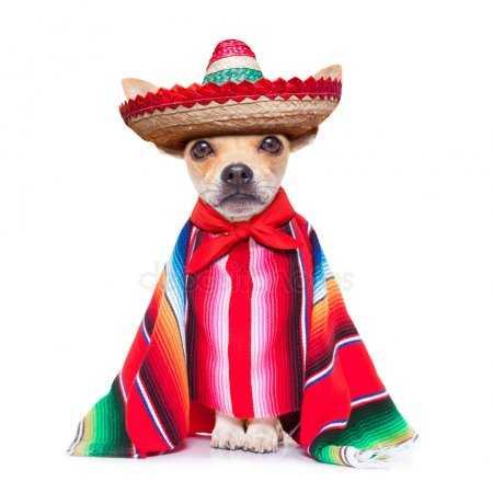 Собака в шарфе. Картинки собака с шарфиком, Стоковые ...