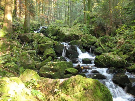 Schwarzwald National Park-prahub