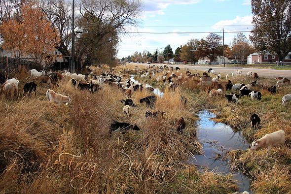 Wyoming Lawnmowers