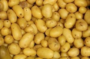 Potato-Bintje-300x198