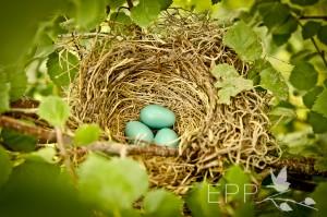 erin nest