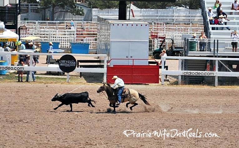 calf roped