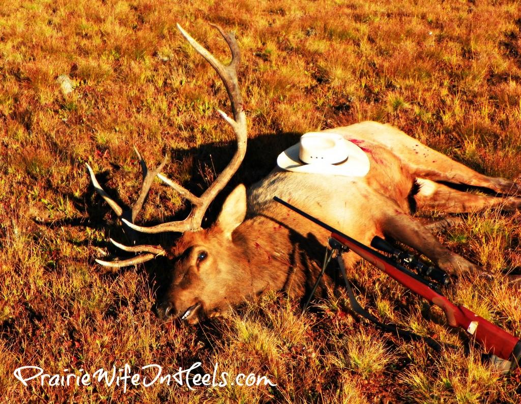 The Cowboy's Elk
