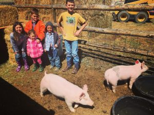 cowkids and pigs