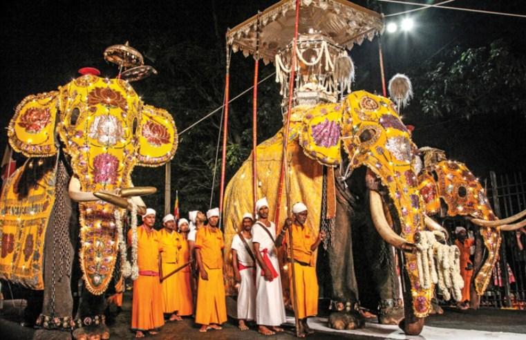 Elephants of Kandy Perahera