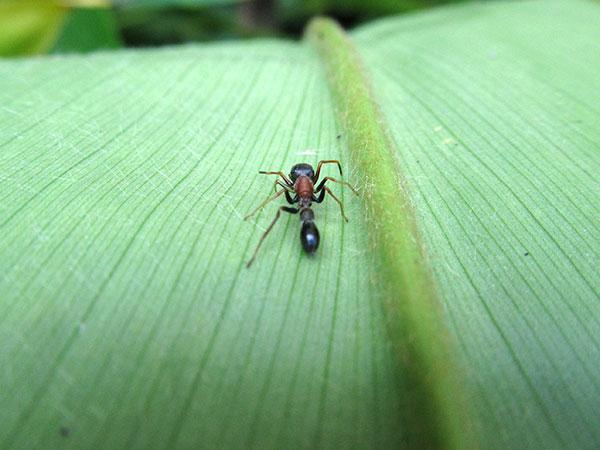 spider in nepal