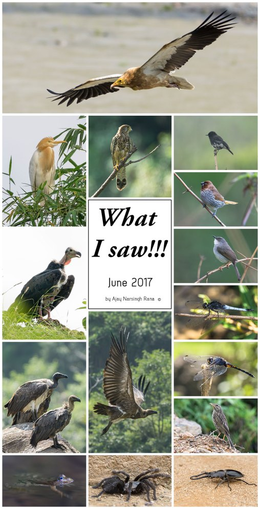 What I Saw - June 2017