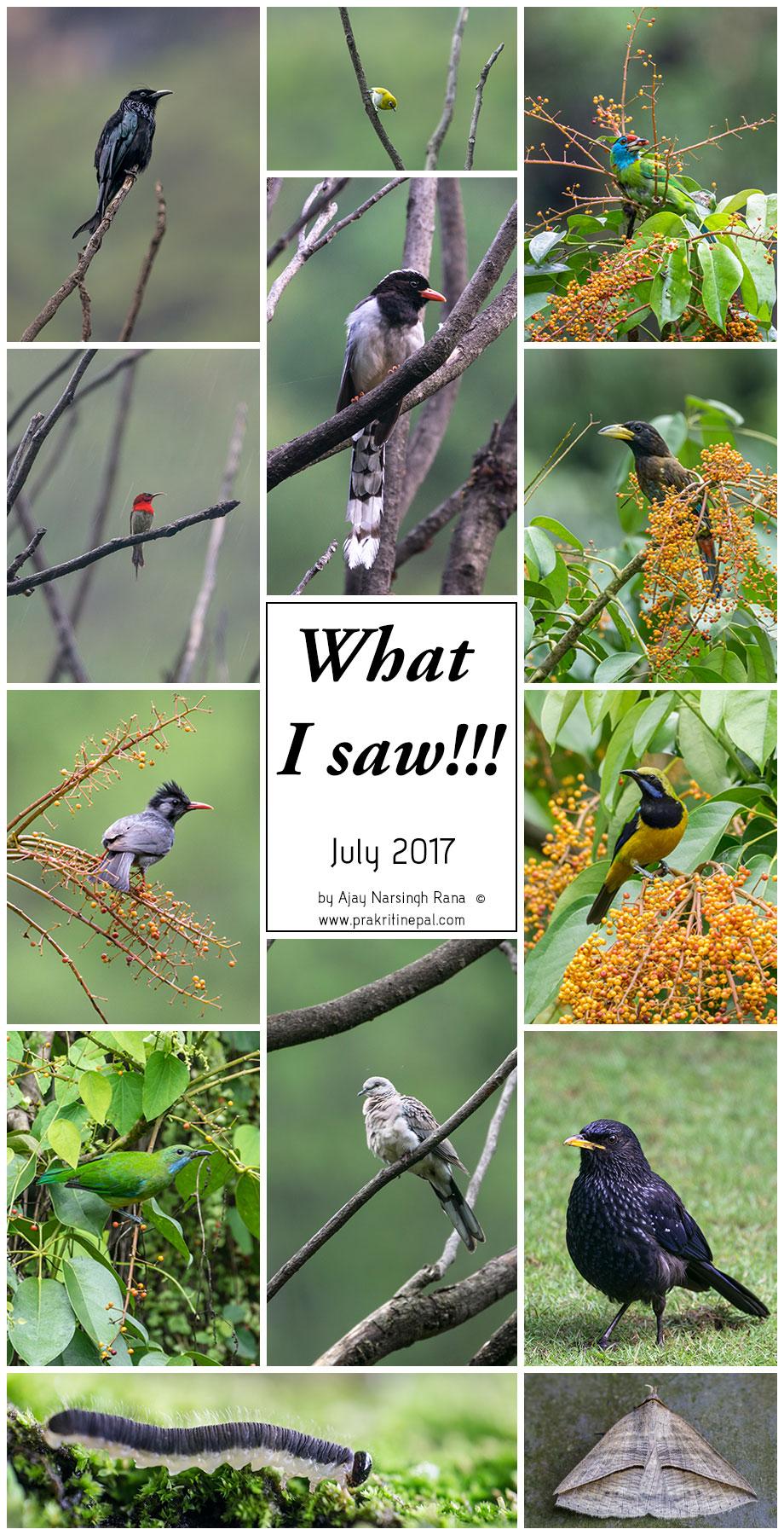 What I saw - July 2017
