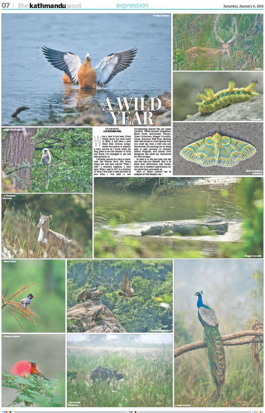 The Kathmandu Post_Wild Year