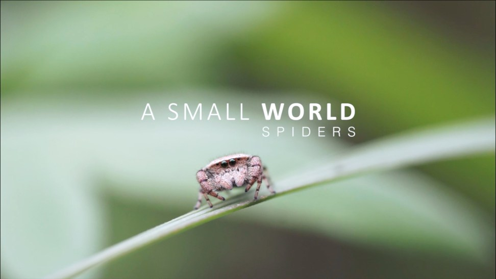 A Small World_Spiders_thumbnail